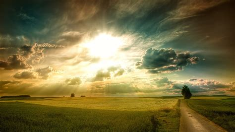 Sunny Fields Wallpapers | HD Wallpapers | ID #13967