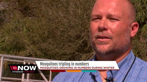 Number of mosquitoes triple in one month in Hillsborough