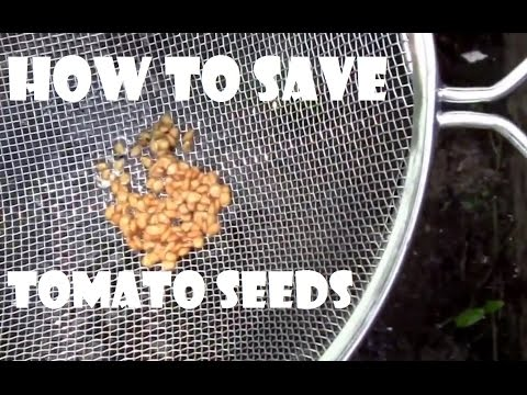Charles Hart Seed Company Totally Tomato! - From Seed to