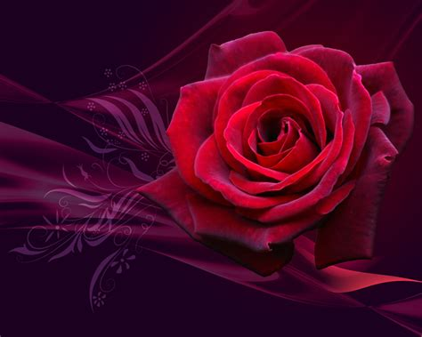 LAP TOP VALLEY: Red Roses - Wallpapers