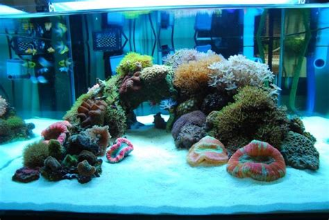 Love the minimal aquascaping, color, and texture | Pets