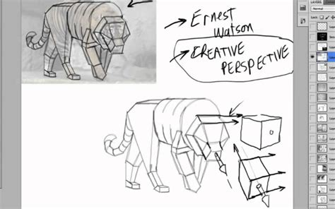 Drawing Animals In Perspective - YouTube