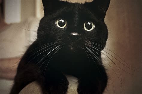 Black Cats Aren't Getting Adopted Because They Look Bad in