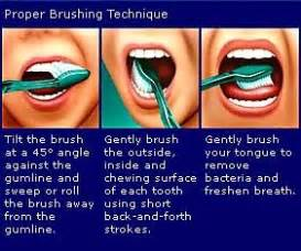 Tooth & Gums: Brushing Technique