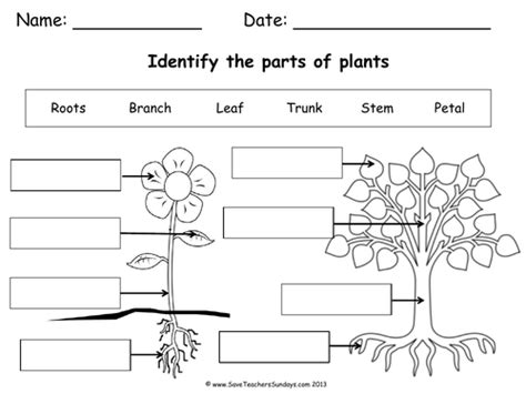 Parts of a plant & a tree lesson plan & worksheet