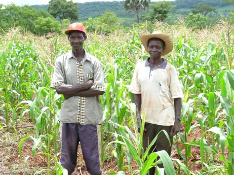 Smallholder Farmers in Mozambique Reap the Benefits of