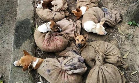 Dogs Illegally Being Transported to Nagaland to Be Sold As