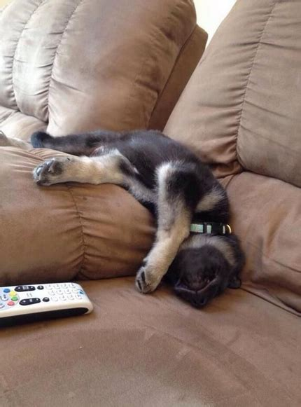 17 Times German Shepherd Puppies Proved They're The Best