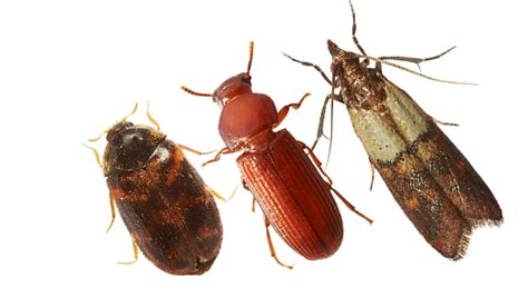 Commercial Stored Product Pest Elimination | Ecolab