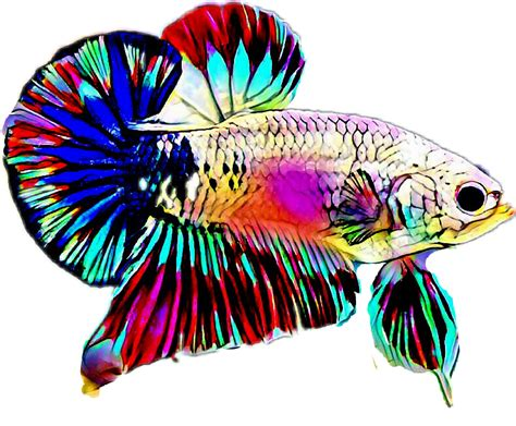 Library of png black and white beta fish png files Clipart
