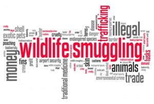 How to Become a Wildlife Forensics Specialist