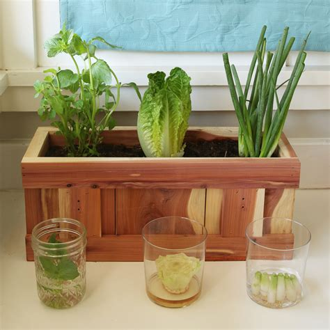 How To Grow Vegetables From Kitchen