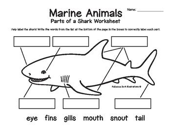 Marine Animals - Structure Labeling Worksheets by Rebecca