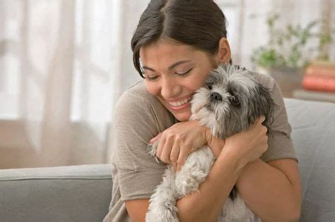 51 Dog Tips ideas | dogs, your dog, pets